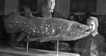 Cá cổ đại 420 triệu năm tưởng như tuyệt chủng bất ngờ được tìm thấy