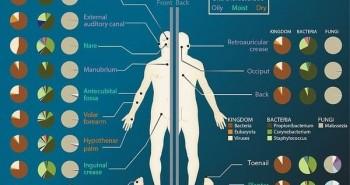 Điều gì ảnh hưởng đến hệ vi sinh vật của cơ thể người?