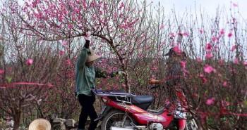 10 loại hoa thường cắm trong gia đình xứ Bắc ngày Tết