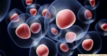 Tạo siêu tế bào gốc khắc phục hiện tượng thải ghép